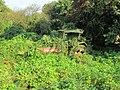 Overgrown tractor.jpg