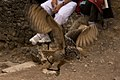 Owl (2724088043).jpg