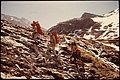 Packing Expedition Of Explorer Post 397 Of Los Angeles Area. Hike Started At 7500 Ft., Finished At Frozen Monarch... - NARA - 543381.jpg