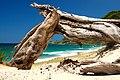 Pakiri Beach.jpg