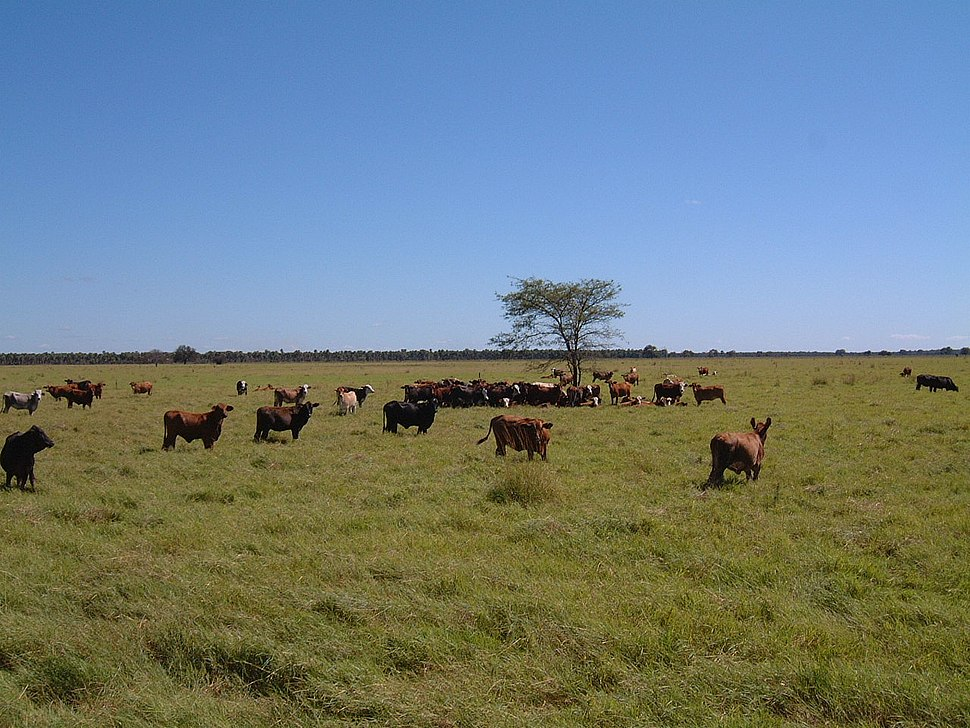 ParaguayChaco Cattleranch3 PdeHayes
