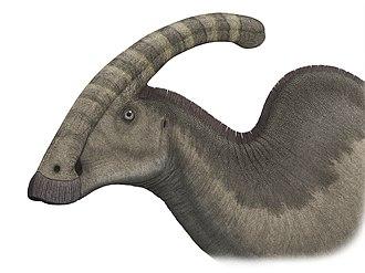 Cerapoda - Image: Parasaurolophuspic steveoc