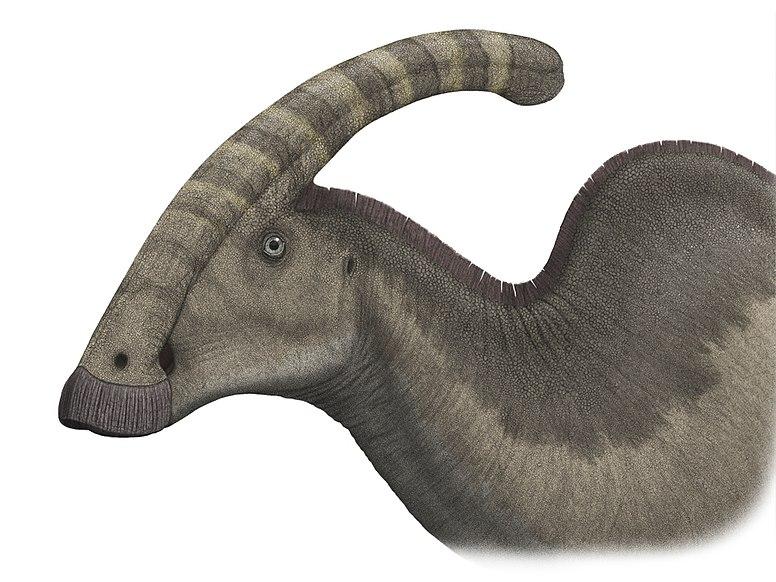 File:Parasaurolophuspic steveoc.jpg