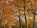 Park views in autumn (Netherlands 2011) (6311404093).jpg