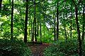 Park w Tychowie (6).JPG