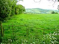 Pasture east of Duke's Wood - geograph.org.uk - 1346712.jpg