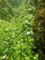 """Paysage subaquatique Subaquatic landscape rivière """"Les Baillons"""" à Enquin-sur-Baillons F Lamiot 33.jpg"""