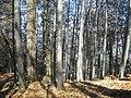 Pe traseu în Munţii Baiului - panoramio.jpg