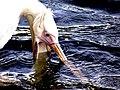 Pelican - Flickr - jonrawlinson.jpg