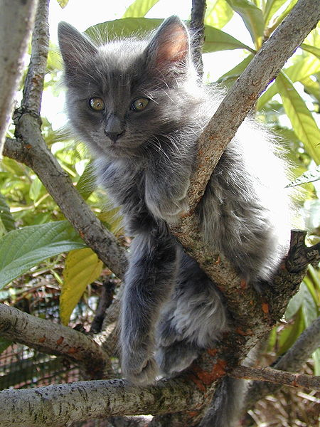 "Obrázek ""http://upload.wikimedia.org/wikipedia/commons/thumb/0/04/Petunia_cat.jpg/450px-Petunia_cat.jpg"" nelze zobrazit, protože obsahuje chyby."