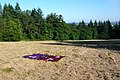 Picnic in field (8436350103).jpg