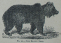 Picture Natural History - No 10 - The Brown Bear.png
