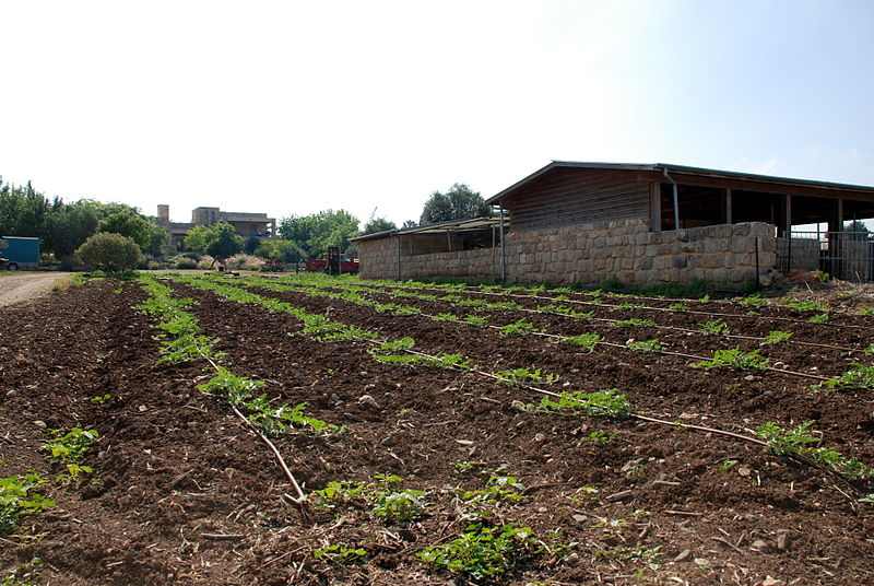Malal village agriculture