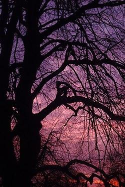 Pink Tinged Sunset.jpg