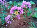 Pink flowers 01.jpg