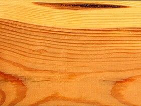 Pinus sylvestris wood ray section 1 beentree.jpg