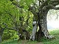 Pisogne, Province of Brescia, Italy - panoramio - pacj.jpg