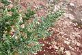 Plant 75 (10274132683).jpg