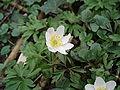 Plant met witte bloem.JPG