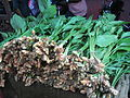 Plant turmeric.JPG