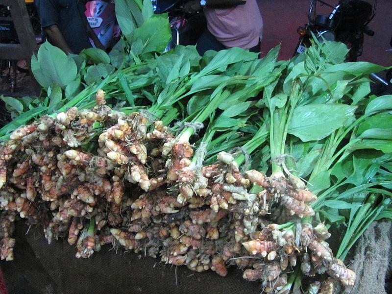 படிமம்:Plant turmeric.JPG