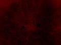 Pleioplana atomata (YPM IZ 073713) 08.jpeg