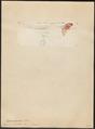 Pogonorhynchus vieilloti - 1815 - Print - Iconographia Zoologica - Special Collections University of Amsterdam - UBA01 IZ18800017.tif
