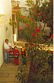 Pointsettia bush Sk08 Joulutähti C.jpg