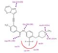 Ponatinib in binding site.PNG