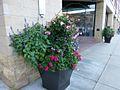 Potted flowers in LoDo, Denver-2.jpg