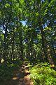 Prírodná rezervácia Borsukov vrch, Národný park Poloniny (11).jpg