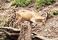 Prague Zoo 16.jpg