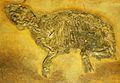 Propalaeotherium parvulum 2.jpg