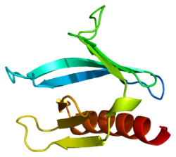 Protein DAPP1 PDB 1fao.png