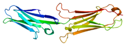 Protein VCAM1 PDB 1ij9.png