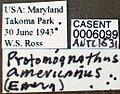 Protomognathus americanus casent0006099 label 1.jpg