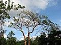 Queen Elizabeth Botanical Gardens 003.jpg