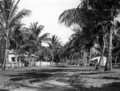 Queensland State Archives 1364 An avenue of palms at Palm Island c 1935.png