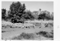Queensland State Archives 5042 Sheep waiting to be crutched Tiree 1952.png