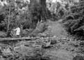 Queensland State Archives 880 Petersens Crossing Yungaburra North Queensland October 1927.png