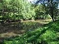 RIBES DEL RIU ONYAR (GIRONA) - panoramio (3).jpg