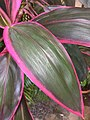 Random plant.jpg