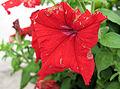 RedFlower-PhotoByRanger.jpg