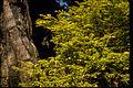 Redwood National Park REDW9348.jpg