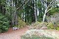 Regional Parks Botanic Garden - Berkeley, CA - DSC04399.JPG