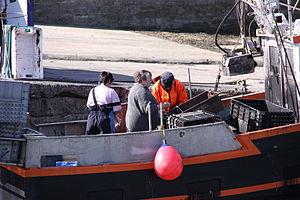 Retour de la pêche à la seiche du fileyeur Jason IV (46).JPG