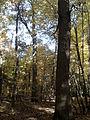 Rezerwat przyrody Dęby w Meszczach 201012 11.59.jpg