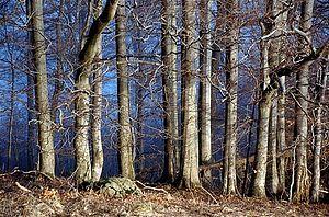 Buchonia - Beech wood in the Rhön