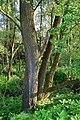 Riegersburg-Lödersdorf - Naturschutzgebiet 14c - Altarme der Raab.jpg