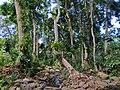 Ripisylve Mayotte.jpg